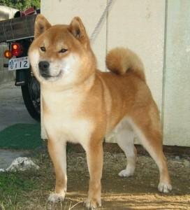 dog11c