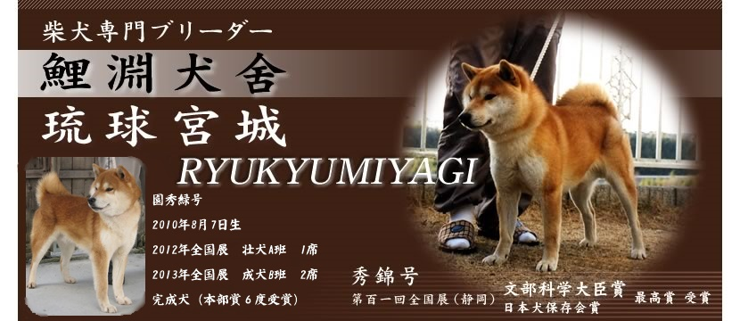柴犬専門店|柴犬専門ブリーダー【鯉渕犬舎・Ryukyumiyagi】
